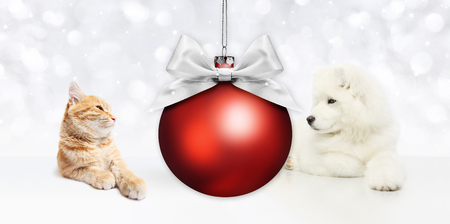 animals christmas theme, cat and dog with red ball and silver satin ribbon bow. Stock Photo