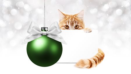 ginger cat and green christmas ball with gift greeting card, template copy space.