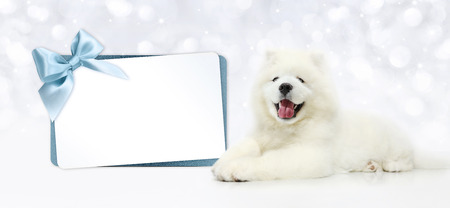 Dog with blank gift card isolated on blurred lights white background.