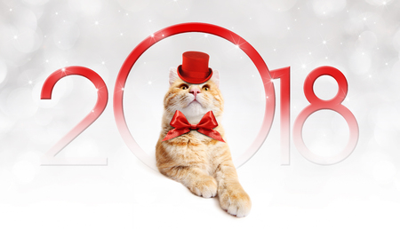 Text 2018 Christmas magic ginger cat with red hat. Stock Photo