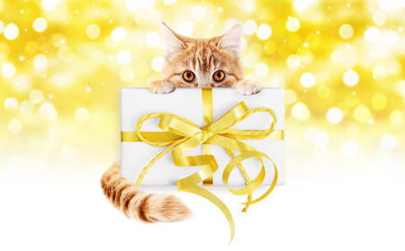 ginger cat and box gift present with golden ribbon bow Isolated on christmas bright lights