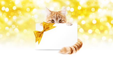 ginger cat and gift card with golden ribbon bow Isolated on christmas bright lights