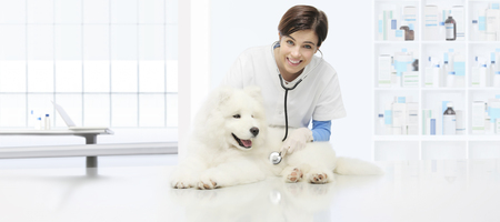 veterinary examination dog, smiling veterinarian with stethoscope on table in vet clinic. Stock Photo