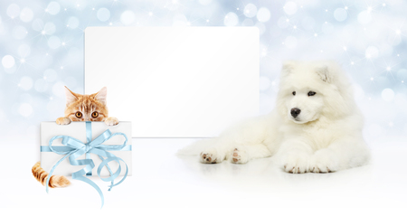 gift card, dog and cat with package on christmas lights. background, banner copy space template Stock Photo
