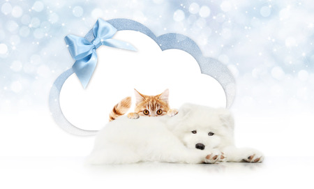 pets store signboard with cat and dog together cloud shape and blue ribbon bow on christmas lights background blank template and copy space. Stock Photo