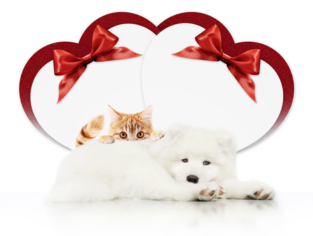 valentine gift card or pets store signboard with cat and dog together heart shape and red ribbon bow on white background blank template and copy space.