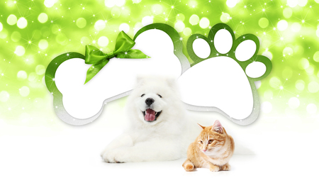 funny pets cat and dog  together with bone and paw imprint shape gift card green ribbon bow on blurred christmas lights background blank template and copy space.