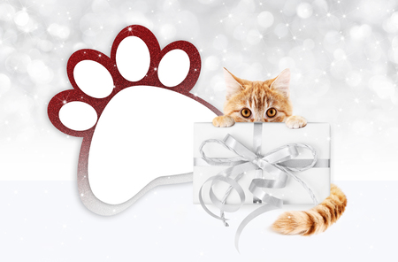funny pet cat showing a gift box with silver ribbon bow and paw imprint shape isolated on blurred lights background blank template and copy space.