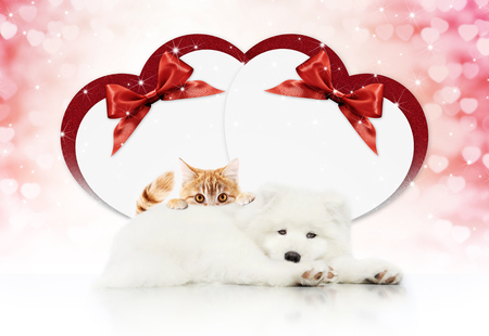 valentine gift card or pets store signboard with cat and dog together heart shape and red ribbon bow on christmas lights background blank template and copy space.