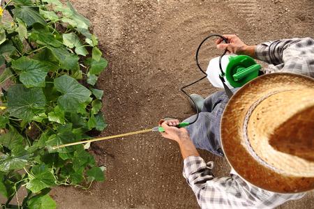 Granjero que trabaja en el huerto, aerosoles de pesticidas en las plantas, vista superior y plantilla de espacio de copia. Foto de archivo