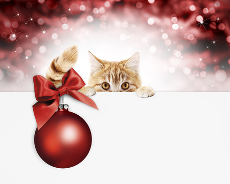 merry christmas signboard or gift card for pet shop or vet clinic, ginger cat showing isolated on white background, red blurred lights background, copy space template. Stock Photo