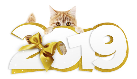 ginger cat showing happy new year 2019 text with golden ribbon isolated on white background, christmas signboard or gift card for pet shop or vet clinic.