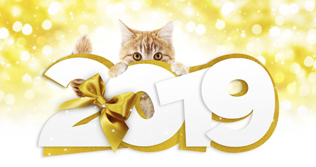 ginger cat showing happy new year 2019 text with golden ribbon bow on blurred gold christmas lights, signboard or gift card for pet shop or vet clinic.