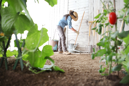 woman in the vegetable garden with rake from the wooden wall of tools, healthy organic food produce concept Stock Photo