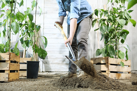 woman with potted plants in the garden, work by digging spring soil with shovel. Reklamní fotografie