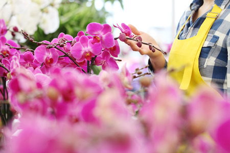hands in garden of flowers, touches in orchid, close up image with copy space. Stok Fotoğraf