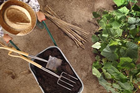 man farmer working in vegetable garden, wheelbarrow full of fertilizer with spade and pitchfork