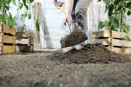 plant in the garden, work by digging spring soil with shovel, near wooden boxes.
