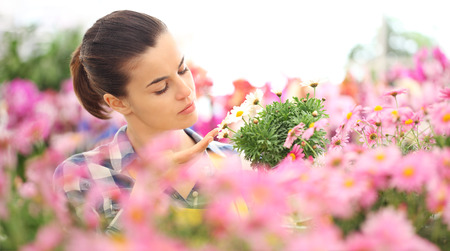 woman in garden of flowers daisies touch daisy, spring concept. Stockfoto