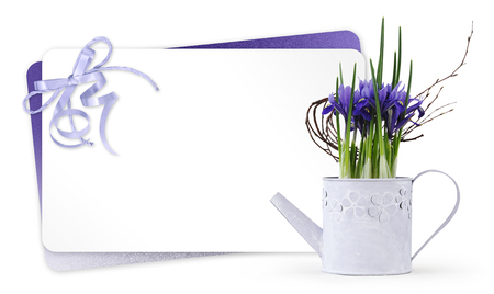 gift card and iris violet flowers in a pot isolated on white background, florist shop or present greeting concept. Stok Fotoğraf
