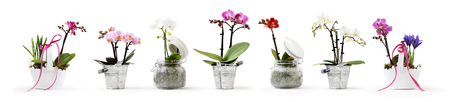flowers in pots set isolated on white background, web banner with copy space for florist shop concept. Stok Fotoğraf