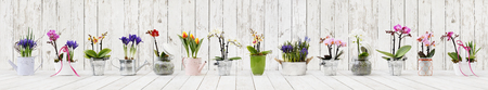 flowers in pots set isolated on white wood background, web banner with copy space for florist shop concept. Stok Fotoğraf