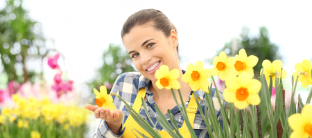 smiling woman in garden of flowers touch daffodils, spring flowering concept. Stok Fotoğraf