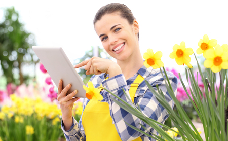 smiling woman in garden of flowers daffodils touch screen of digital tablet, spring flowering concept and internet search. Stok Fotoğraf