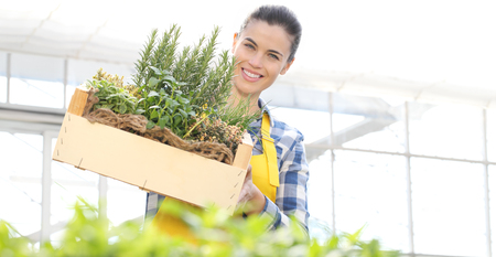 smiling woman with wooden box full of herbs on white background, spring garden concept.