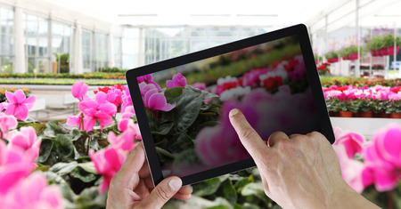 flowers web store concept, online shopping on digital pad with hands pointing and touch screen with spring cyclamen flower plants. Stok Fotoğraf