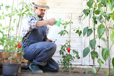 man in vegetable garden sprays pesticide