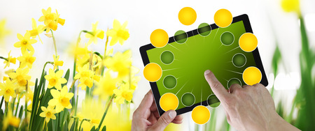gardening and flowers e-commerce concept, online shopping on digital tablet, hand pointing and touch screen with green empty icons, on spring flower daffodils plants background Stok Fotoğraf