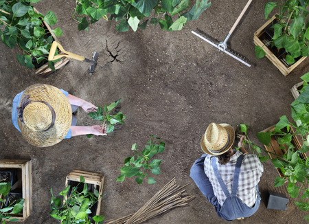 man and woman together gardening work in the vegetable garden, place a plant in the ground, top view from above with copy space