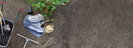 man gardening work in the vegetable garden place a plant in the ground so that it can grow, near wheelbarrow full of fertilizer and gardening equipment, top view from above with copy space 스톡 콘텐츠