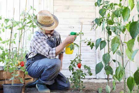 man in vegetable garden sprays pesticide