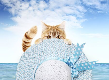 funny pet cat showing a summer hat and blue sky background, animal holiday concept.
