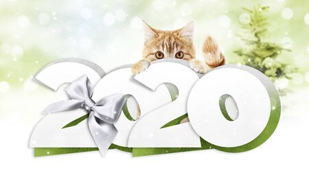Hanging Cat Stock Photos And Images 123rf