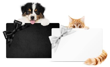 puppy dog and cat pets together showing black and silver gift card isolated on white background.
