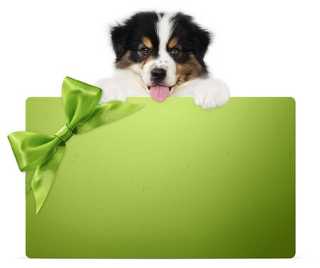 puppy dog showing green gift card with ribbon bow isolated on white background, vet and pet store template for christmas, greeting or promotional event