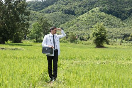 Giovane dottore nel campo di grano verde Archivio Fotografico