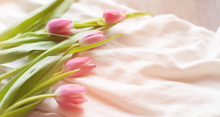 pink satin: Pink tulips on white fabric, lit by the rays of the setting sun