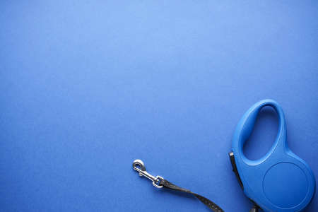 Blue retractable dog leash on a blue background, with space for text. Top view
