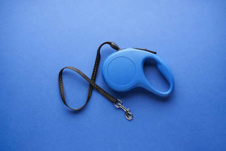 Blue retractable dog leash on a blue background. Flat lay.