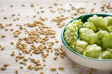 Fresh hops in a bowl and barley on a wooden background, close-up. 版權商用圖片
