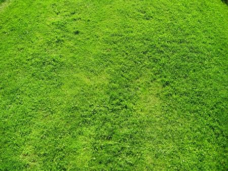 High Resolution Green Grass Background photo