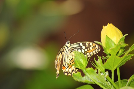 a beautiful butterfly  photo
