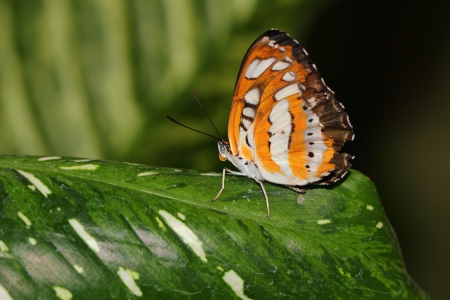 a butterfly photo