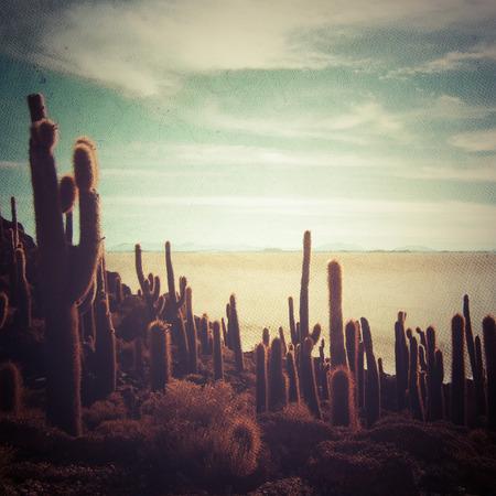 colo: Cactus and desert landscape Stock Photo