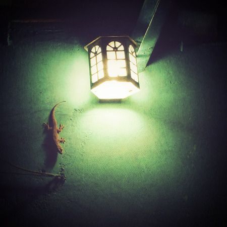 Gecko in the light on a wall photo