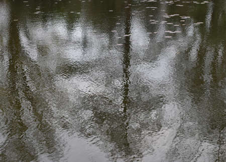 The trace of lotus petals on the reflection of the water surface at the pond in Sapporo Japan